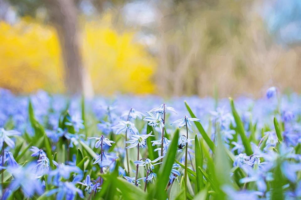 Springlicious in Blue Mountain