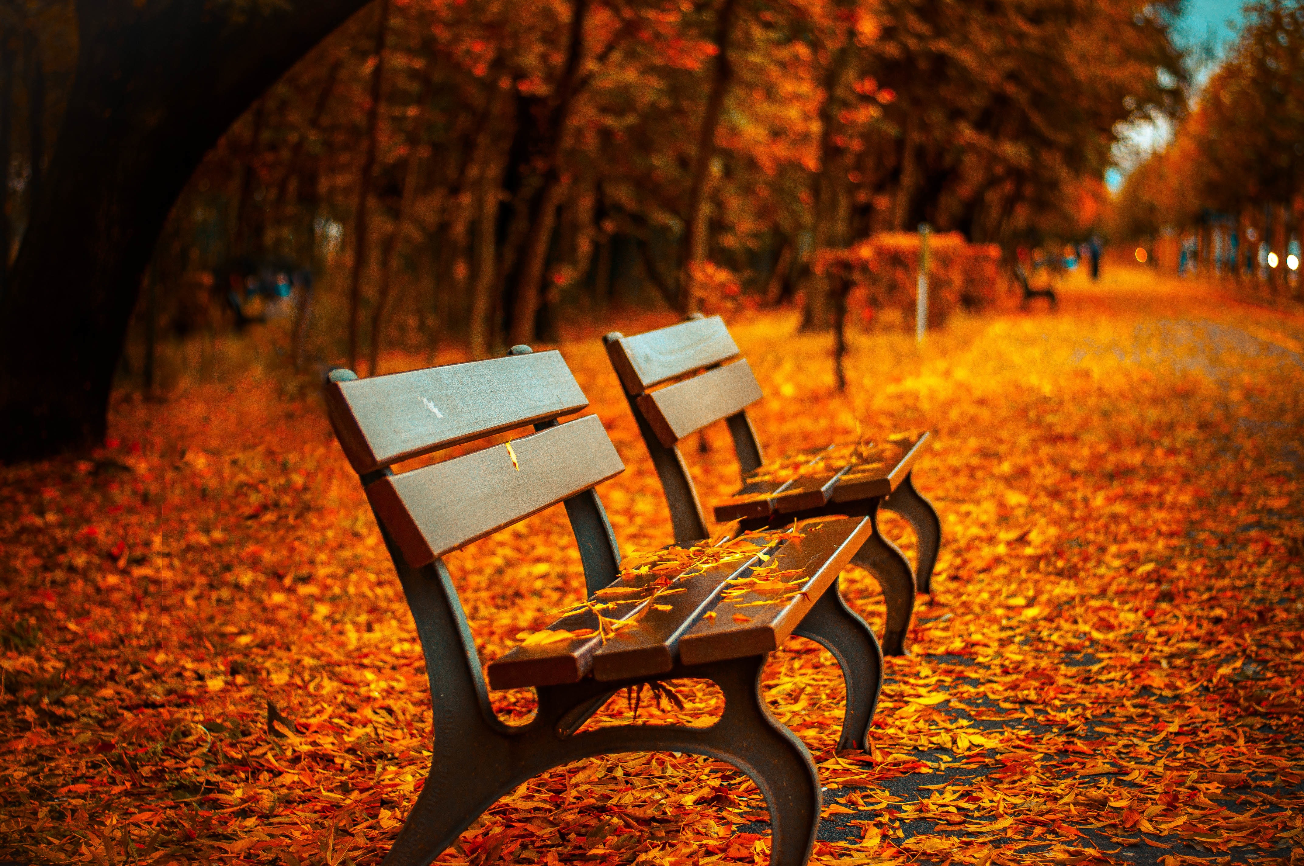Fall Activities in Collingwood