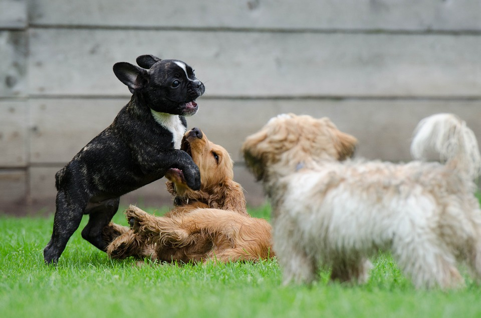 Fun is For the Dogs in Collingwood