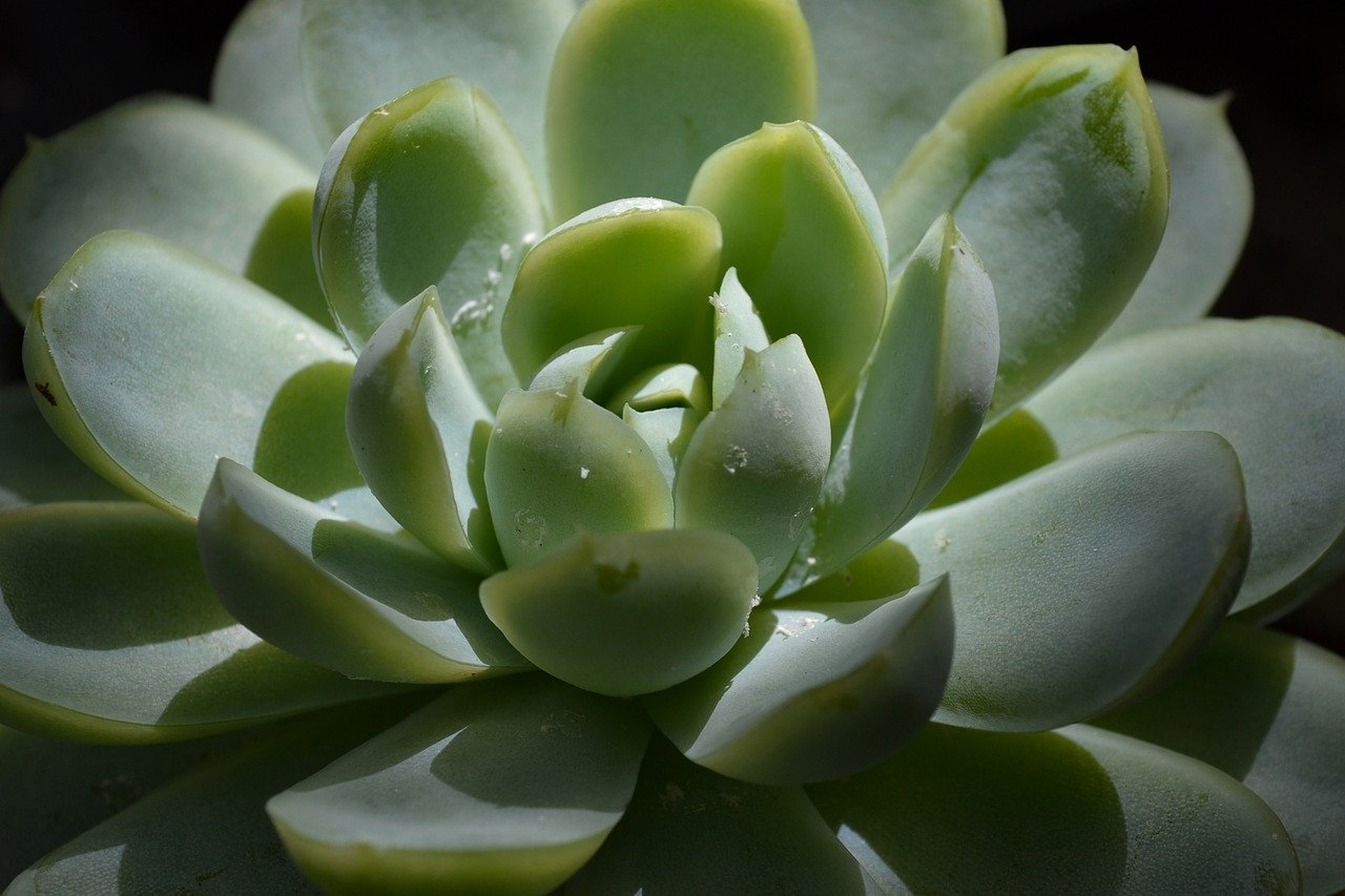Best Houseplants for Your Collingwood House