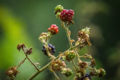 Foraging In Collingwood: 3 Edible Wild Plants You Can Find In Ontario